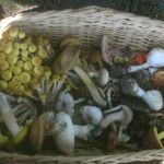 A basket full of mushrooms